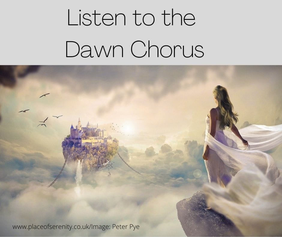 Place of Serenity | Listen to the Dawn Chorus